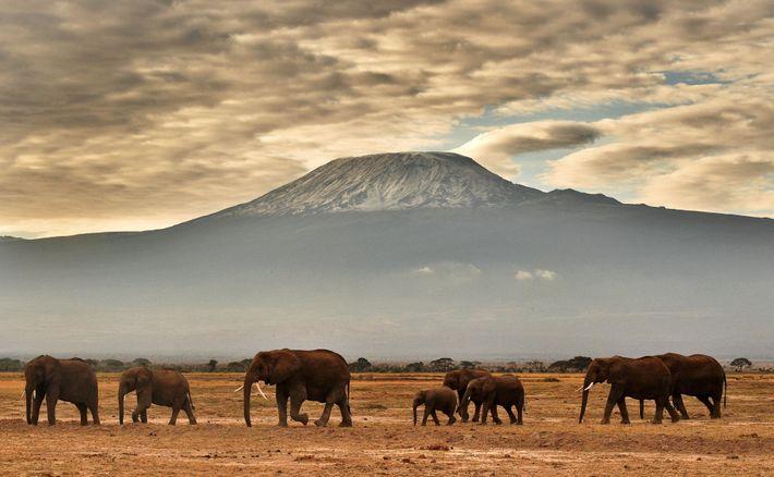 Neben der Bedrohung durch die Wilderei besteht die größte Herausforderung laut dem Naturschützer Gao Yufang darin, ...