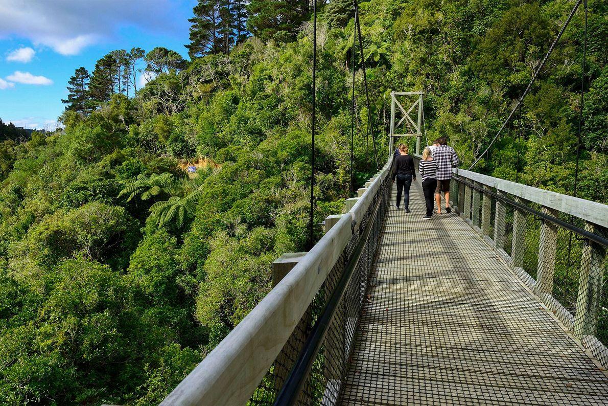 Zealandia, das ehemalige Karori Wildlife Sanctuary, erstreckt sich in Wellington auf einer Fläche von 225 Hektar. ...