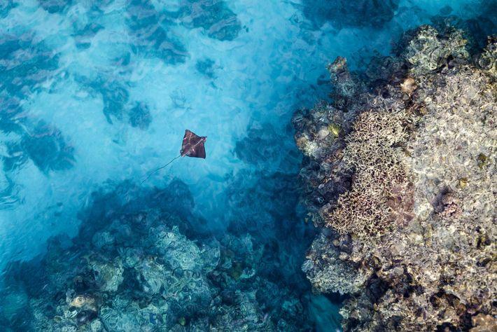 Das kristallklare Wasser von Neukaledonien beherbergt mehr als 9.000 Meeresarten, darunter Stachelrochen.
