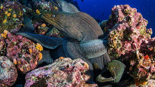 Galerie: Im Galapagos-Meeresschutzgebiet gibt es die größte Haidichte der Welt