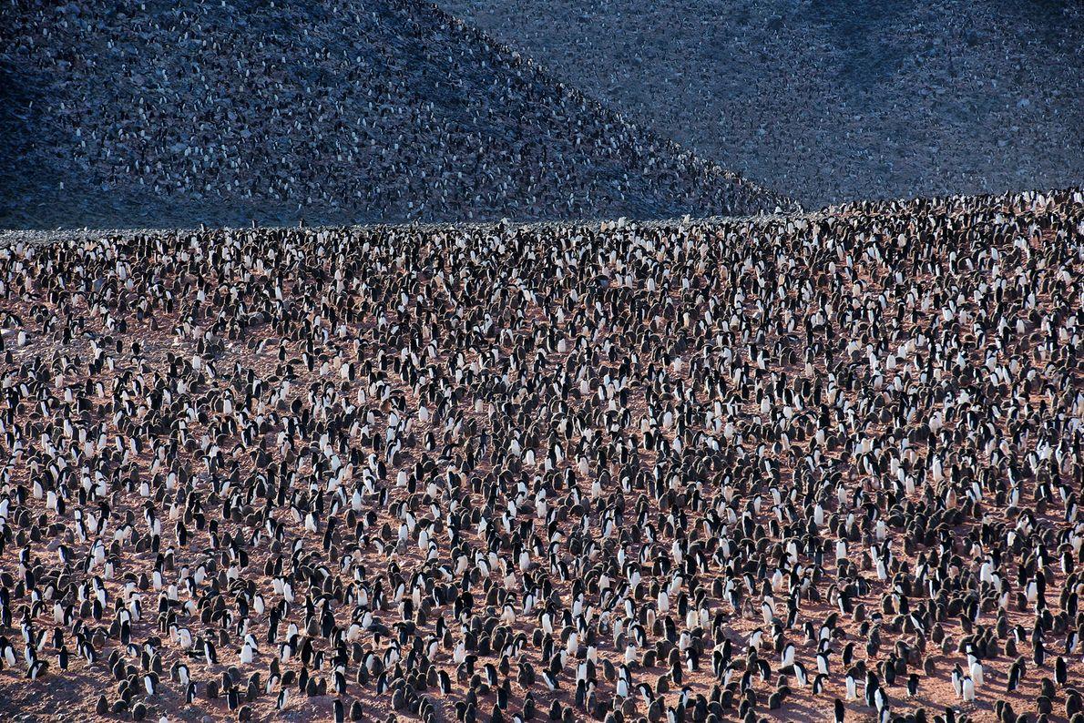 Pinguine leben in riesigen Kolonien – einige davon sind in Gefahr.