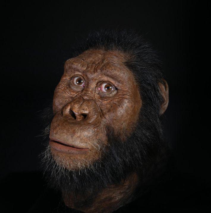 Paläokünstler John Gurche rekonstruierte das Gesicht von A. ananmensis auf Basis von Scans des neu entdeckten ...