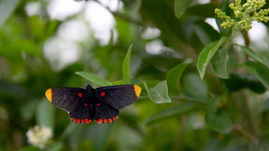 Grenzmauer bedroht Schmetterlingsschutzgebiet