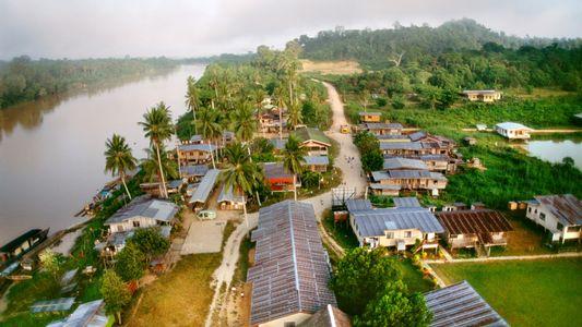 Galerie: Katastrophale Abholzung der Regenwälder schreitet fast ungebremst voran