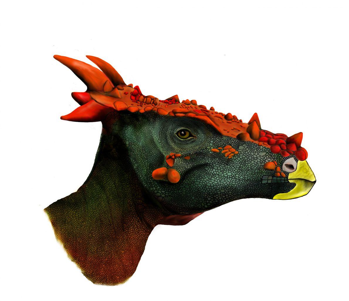 Eine Illustration zeigt, wie der junge Pachycephalosaurus zu Lebzeiten ausgesehen haben könnte. Auffällig sind der Kopfschmuck ...