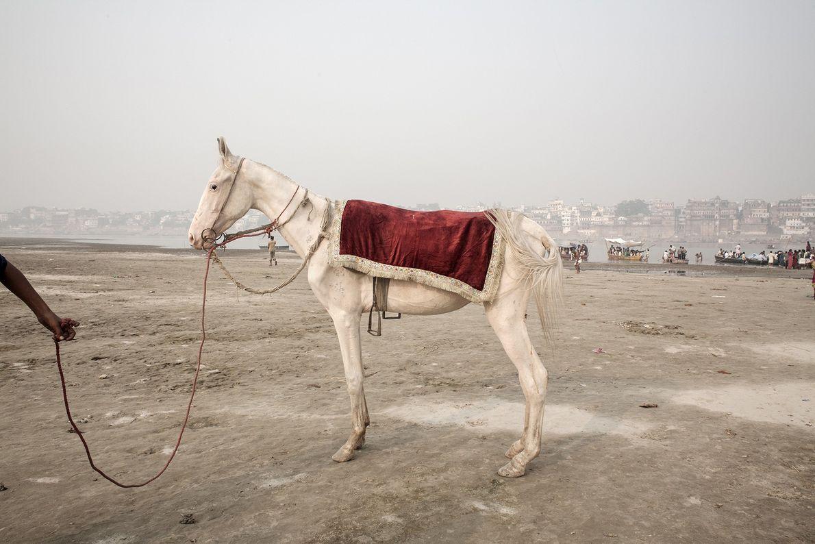 Ein abgemagertes Pferd