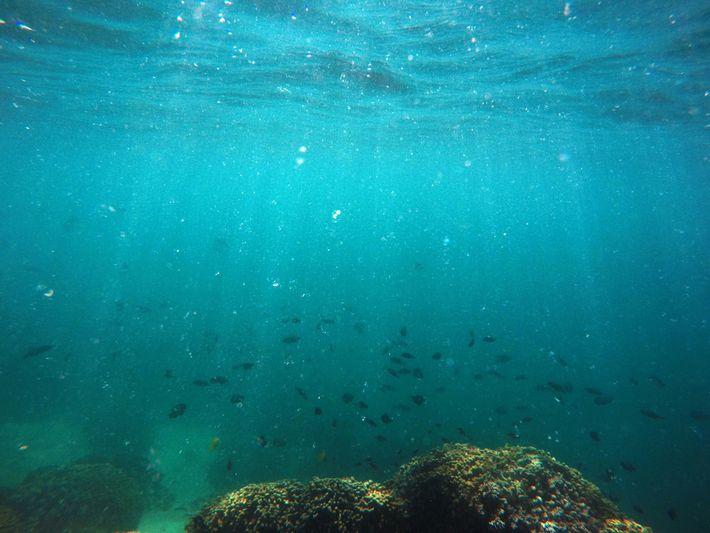 Fische schwimmen über ausgebleichte Korallen in der Kāne'ohe Bay.