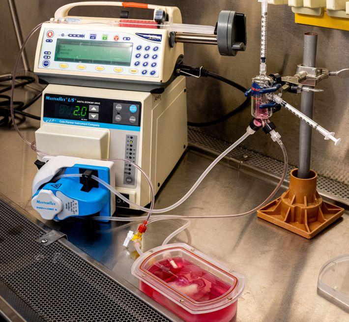 Ein Bioreaktor hält die Minileber am Leben und versorgt sie mit Sauerstoff und Nährstoffen. Mit diesem ...