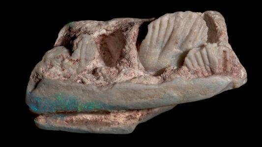 Exklusiv: Schillerndes Opal-Fossil offenbart neuen Dinosaurier