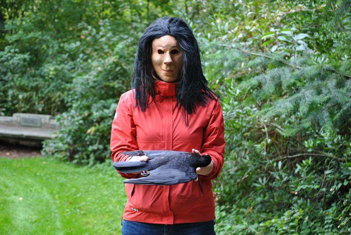 Ein Freiwilliger demonstriert, wie die ausgestopften Krähen für das Experiment von Swift präsentiert wurden.