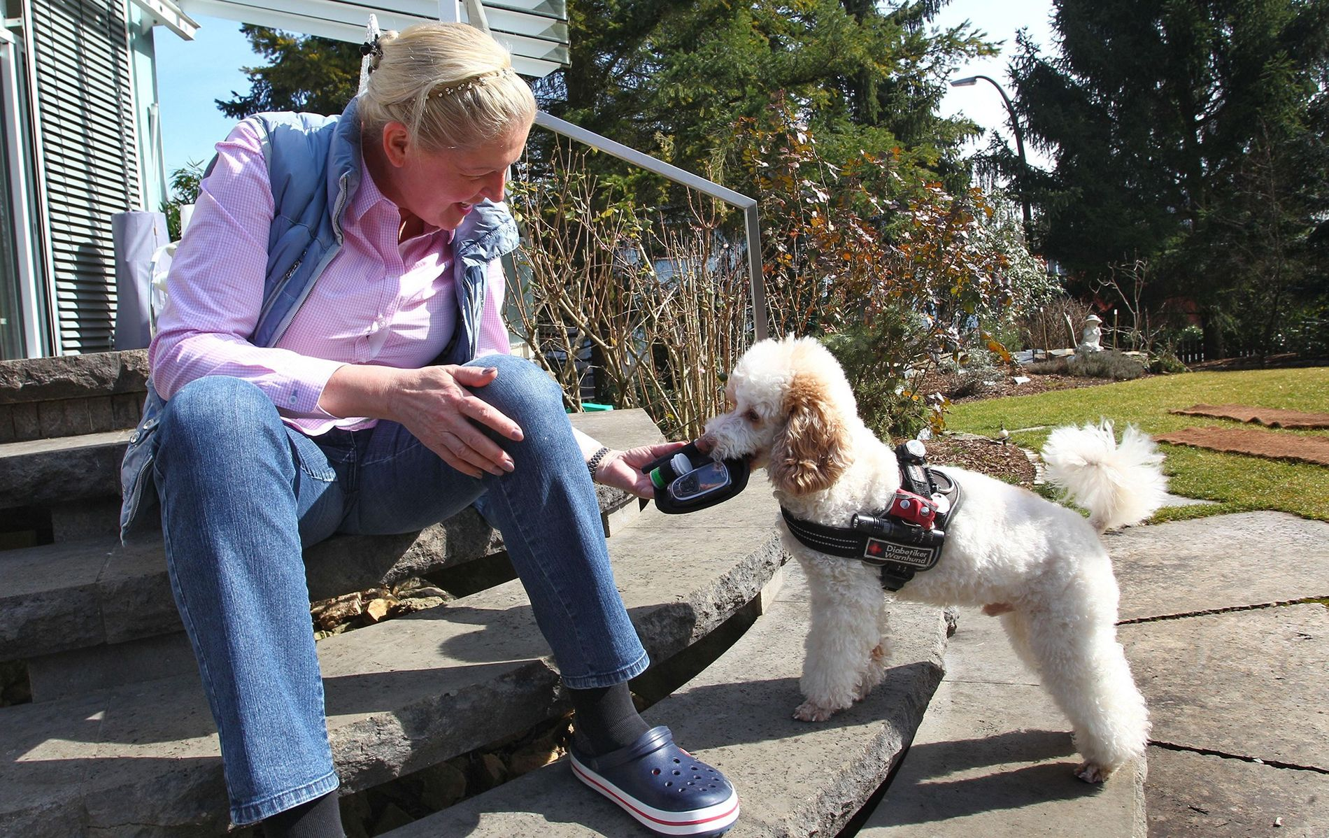 Lebensretter: Wie Hunde Krebs und Diabetes erschnüffeln