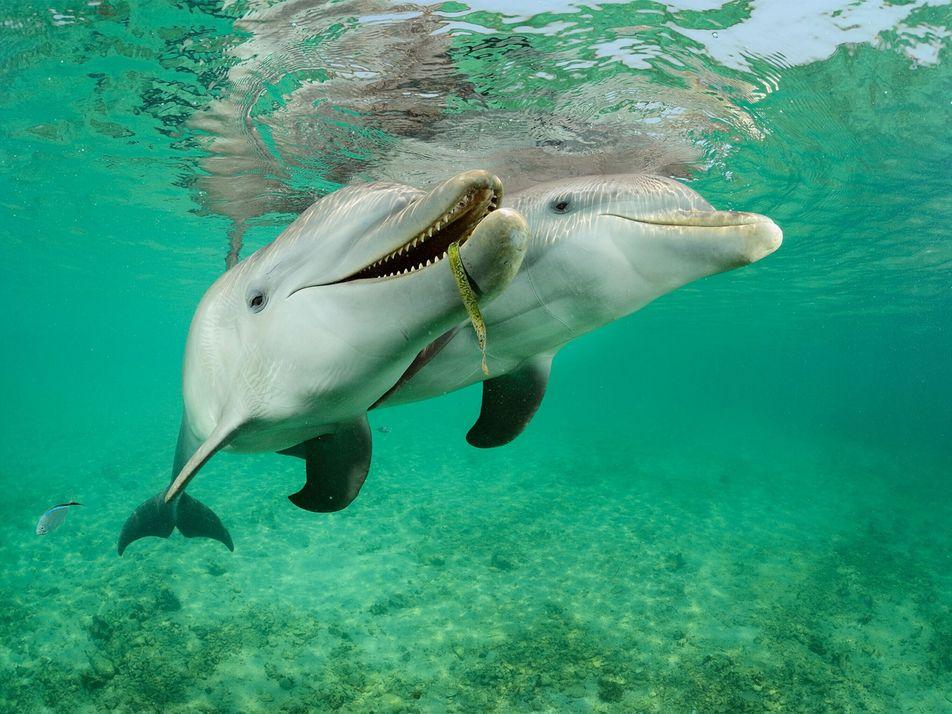 10 Delfin-Familienfotos