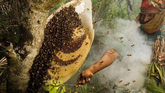 Galerie: 10 süße Fotos von Honigbienen