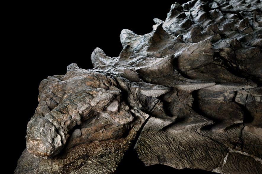 Beeindruckendes Dinosaurierfossil gehört einer neuen Art an