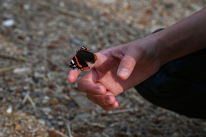 Ein Schmetterling verweilt auf der Hand der 14-jährigen Viola Heigl auf dem Bauernhof ihrer Familie im ...