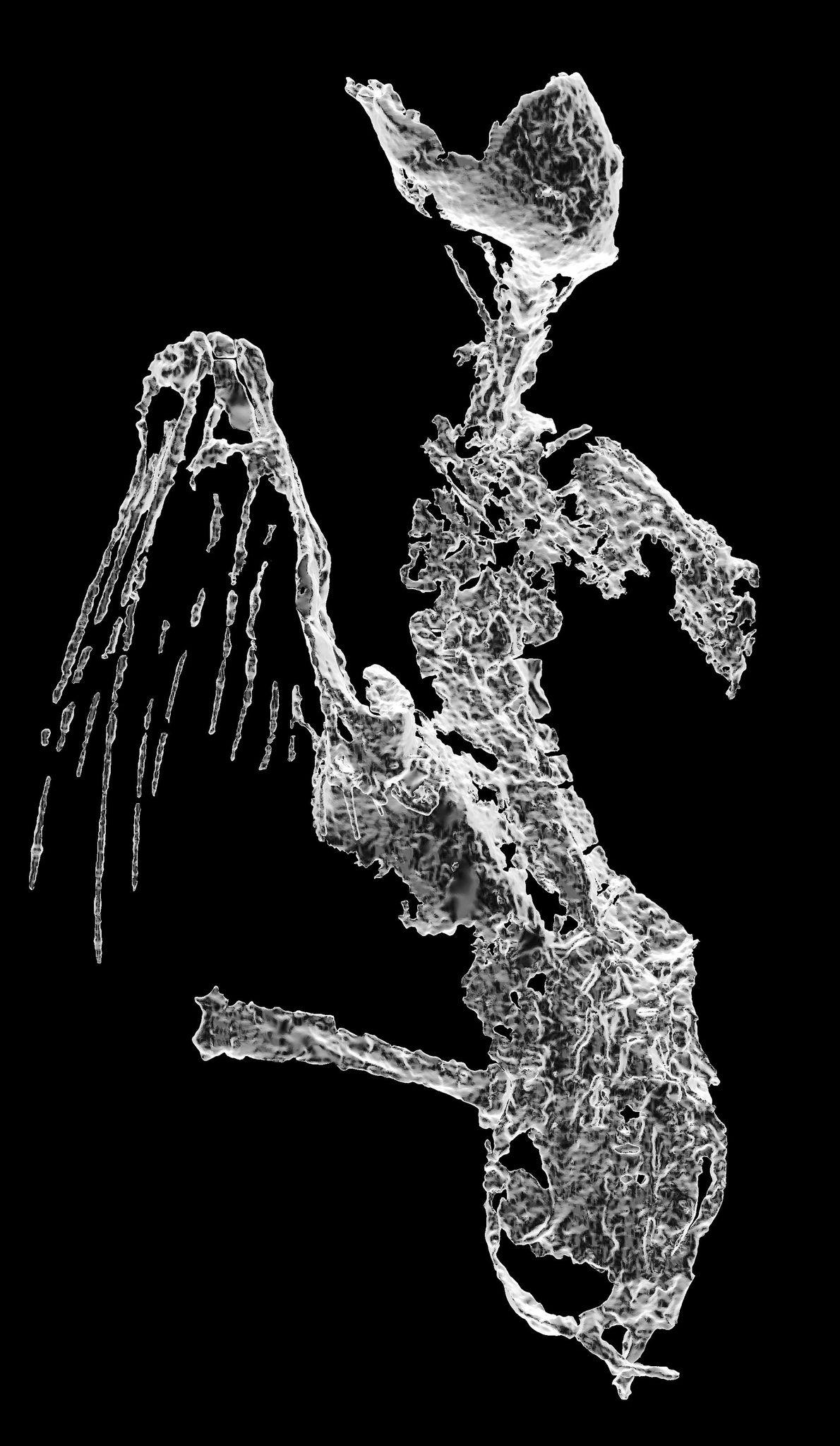 Diese computertomographische Rekonstruktion zeigt das Skelett des Vogels und die Kiele seiner Schwungfedern von vorne. Der ...