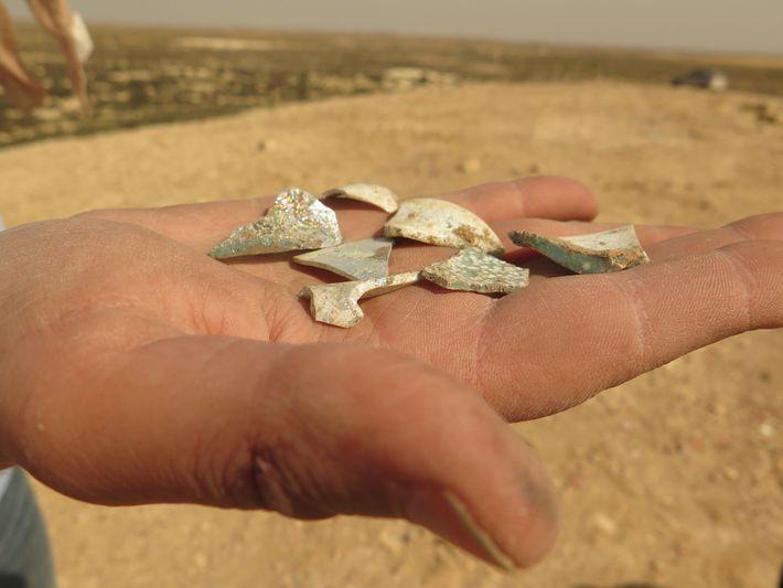 Muscheln aus den Müllbergen von Elusa zeigen, was die Bewohner vor 1.500 Jahren so weggeworfen haben.