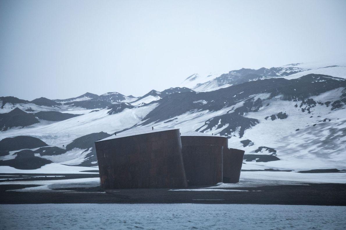 Bei der Whaler's Bay in der Caldera ragen die Reste der norwegischen Hektor-Walfangstation aus dem Nebel, …