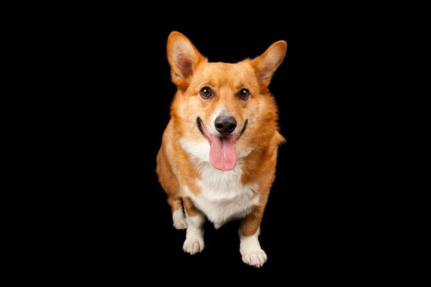 Hunde wissen, was wir fühlen