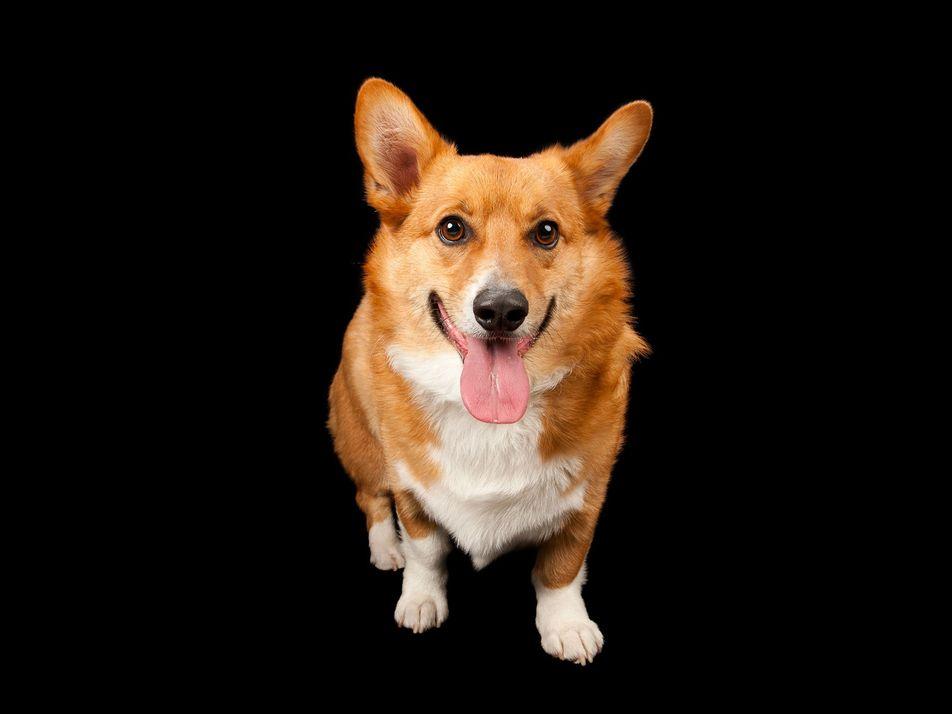 Galerie: Hunde wissen, was wir fühlen