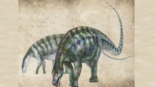 """""""Erstaunlicher Drache"""" schreibt Evolution der größten Saurier um"""