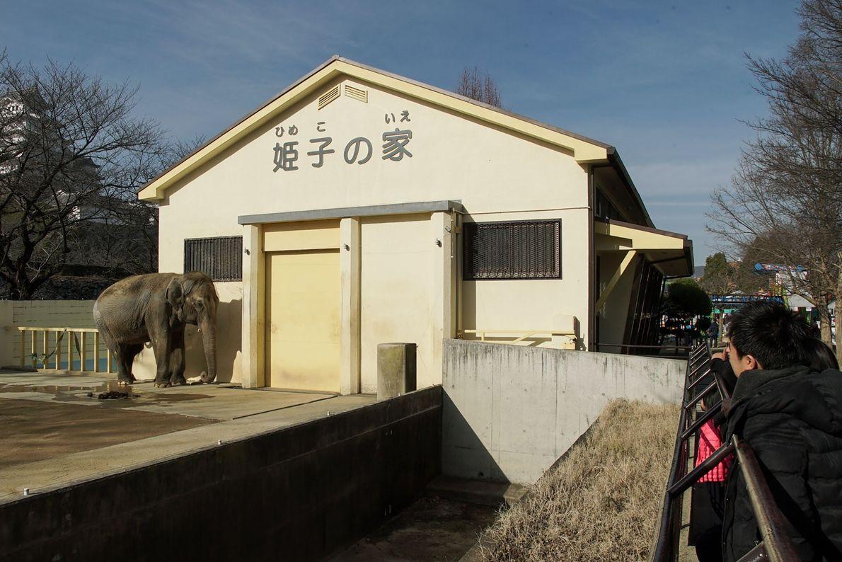23 Jahre hat Himeko schon allein in ihrem Gehege im Himeji City Zoo verbracht.