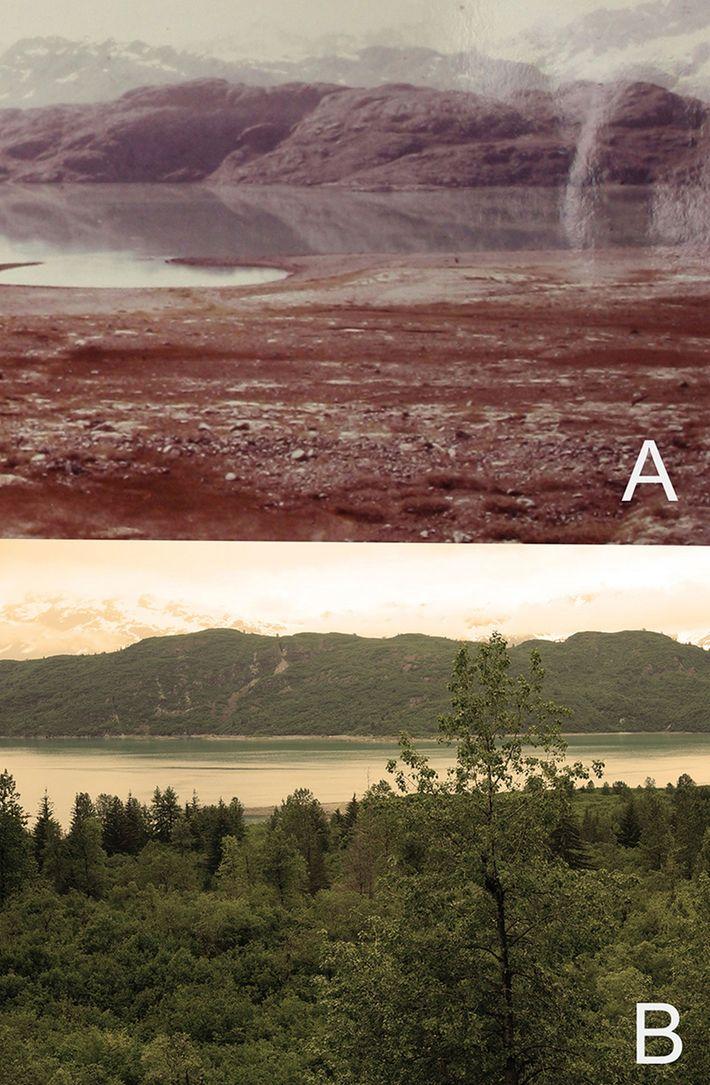 Veränderung der Glacier Bay