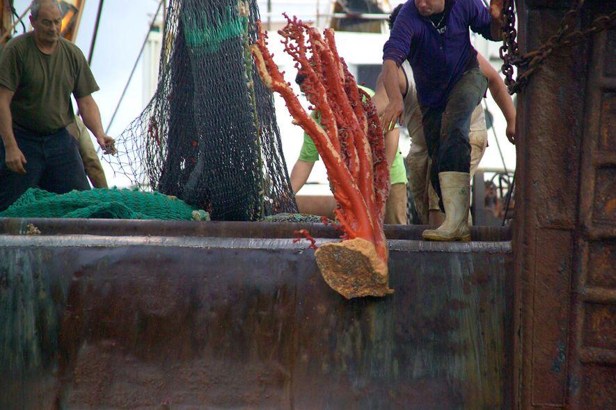 Die Schleppnetzfischerei zählt zu den schädlichsten Praktiken in der Industrie. Bei dem Vorgang werden für gewöhnlich ...