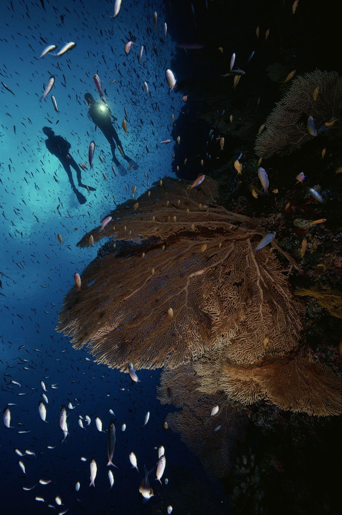 Taucher vor Korallenriff