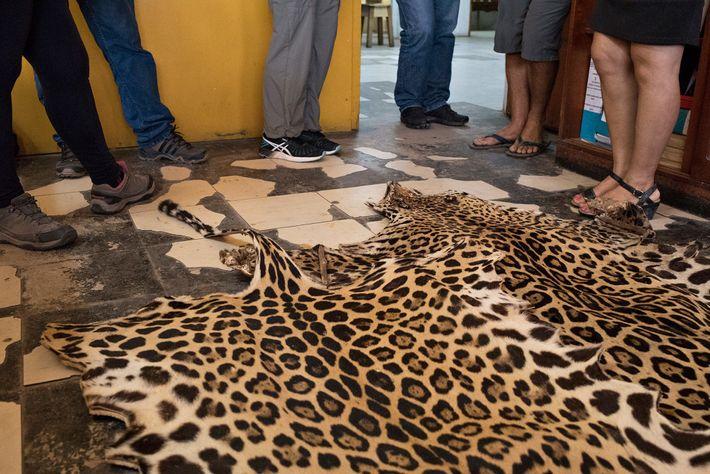 Jaguarhäute