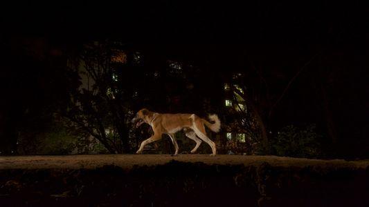 Galerie: Stadtleoparden und ihr Nutzen für die menschliche Gesundheit