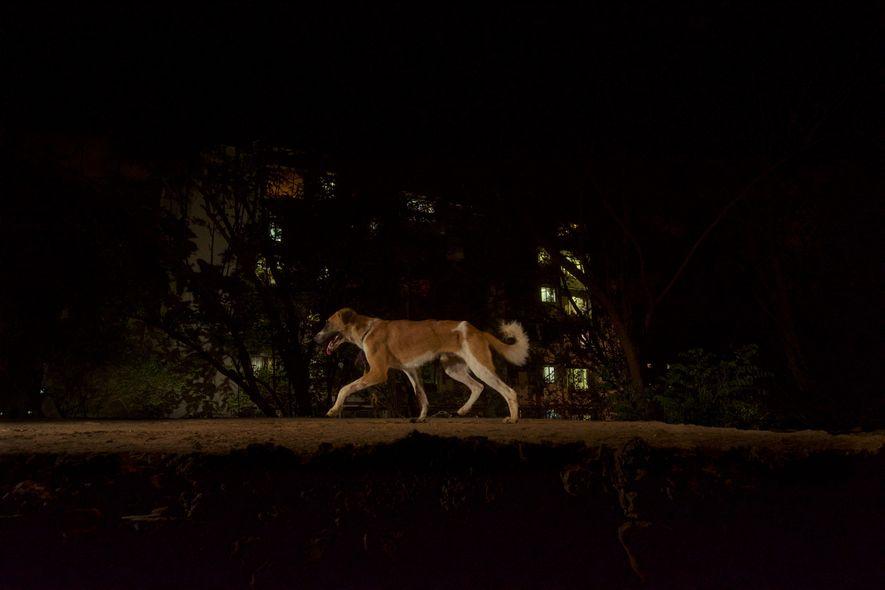 Eine Kamerafalle hat einen Hund im Sanjay-Gandhi-Nationalpark abgelichtet, der über eine alte Brücke lief.