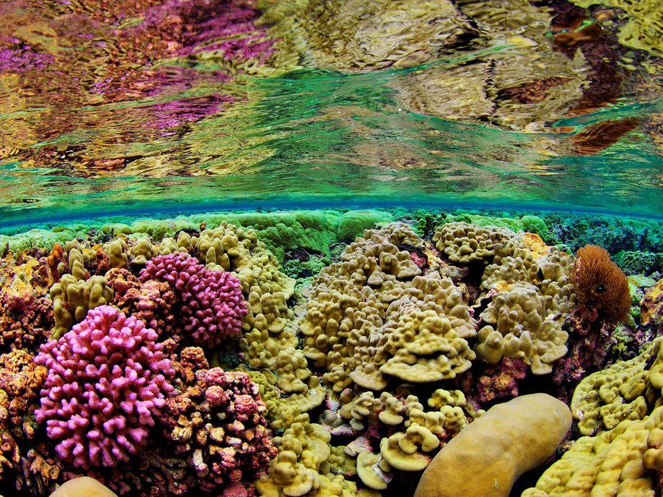 Galerie: Das Leben im Pazifik