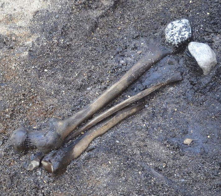 Die Beinknochen ausgewachsener Menschen wurden vom Schlachtfeld aufgesammelt und im Feuchtgebiet zusammen mit Steinen arrangiert, die ...