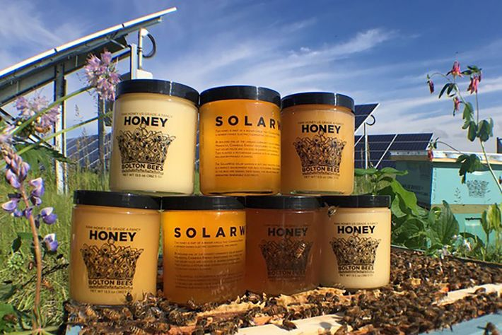 Bolton Bees Honig
