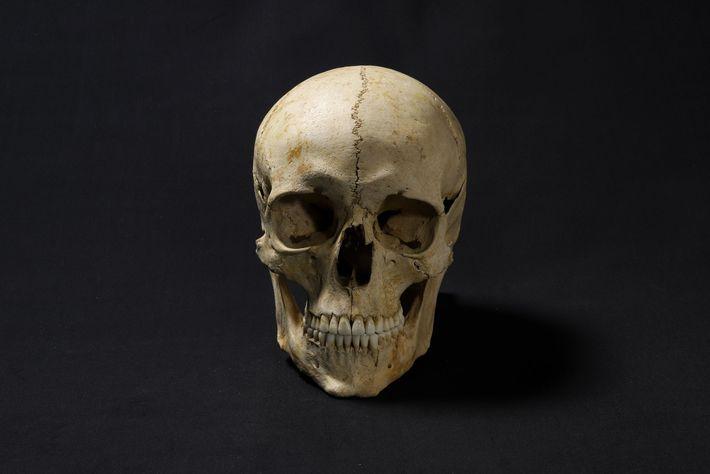 Der Schädel des Skeletts wurde eingescannt und dann mit einem 3D-Drucker repliziert. Diese Kopie bildete die ...