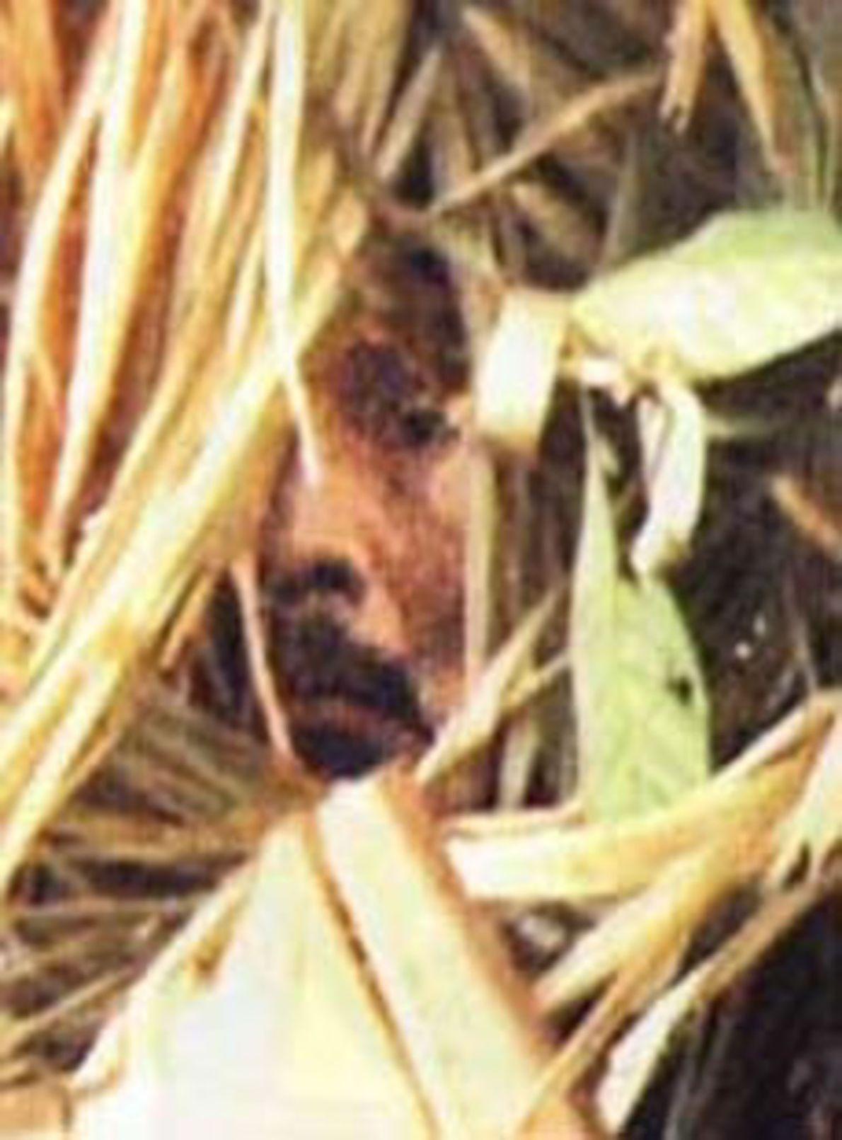 """Ein vergrößertes Standbild aus der Dokumentation """"Corumbiara"""" von Vincent Carelli, die 2009 erschien. Es zeigt das ..."""