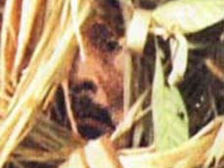 Galerie: Aufnahmen unkontaktierter Stämme könnten helfen, sie zu retten