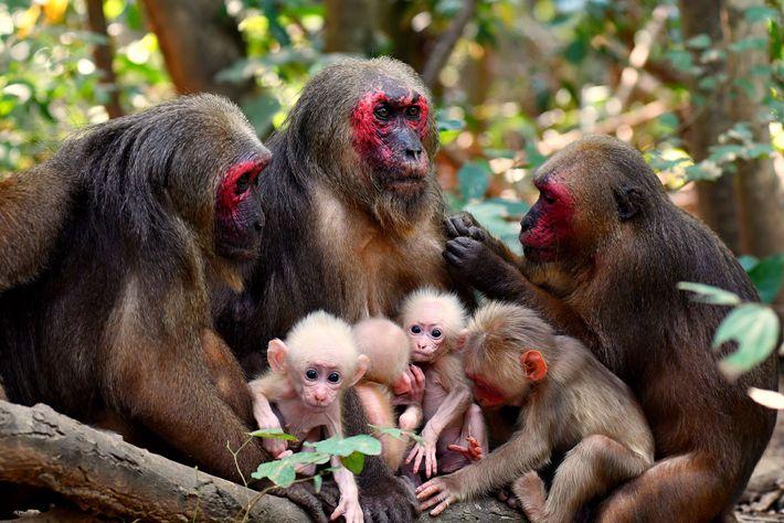 Affenmütter und ihr Nachwuchs