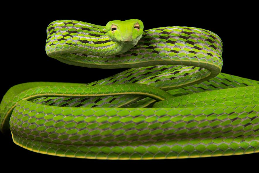 22 spektakuläre Porträts von Schlangen