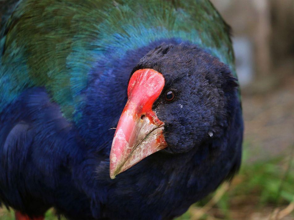 Eingezäunter Stadtpark ist ein Paradies für seltene Vogelarten
