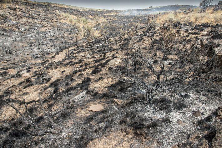 Verbrannte Erde nach dem Duncan Fire in Boise im US-Bundesstaat Idaho. Elizabeth Kolbert rechnet mit einer ...
