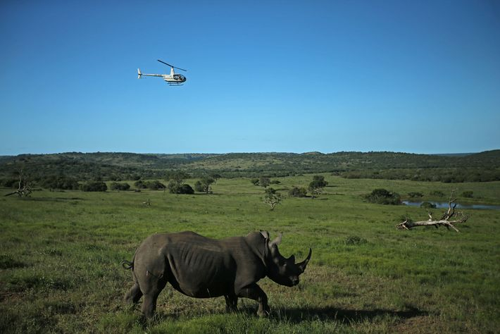 Hubschrauber von Rhino Without Borders