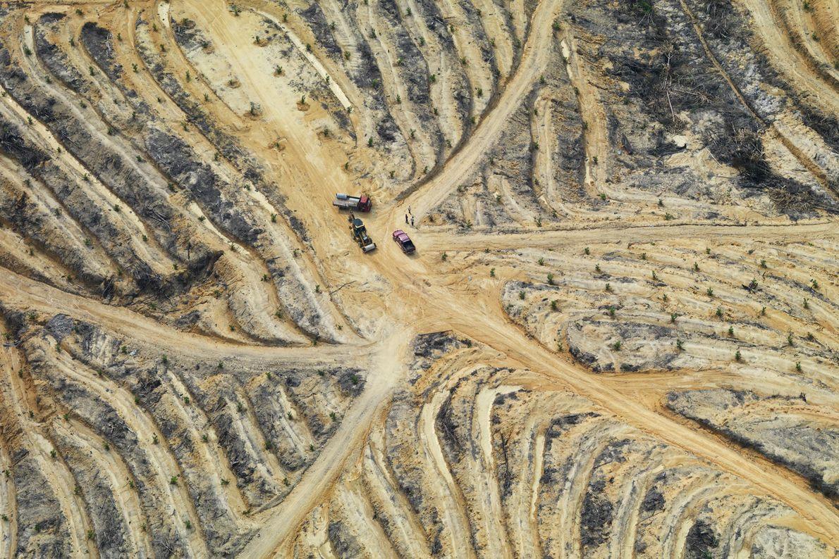 Diese Luftaufnahme zeigt den degradierten Boden in Johyor in Malaysia. Tropische Wälder werden vor allem abgeholzt, ...
