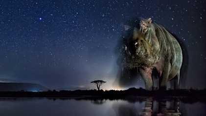 Galerie: Tierfotografie: Das nächtliche Treiben am Wasser