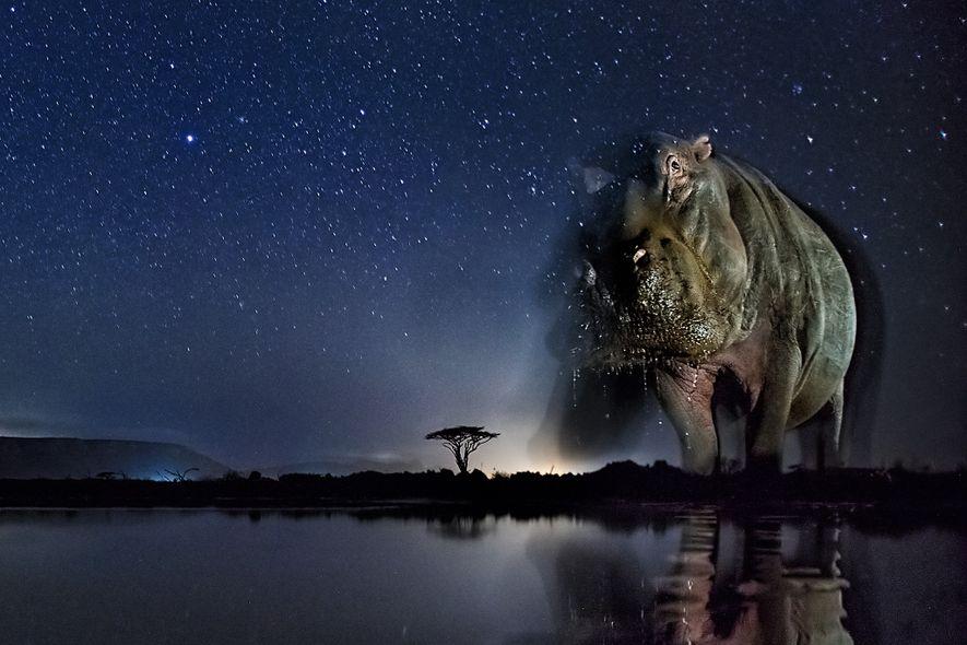 Tierfotografie: Das nächtliche Treiben am Wasser