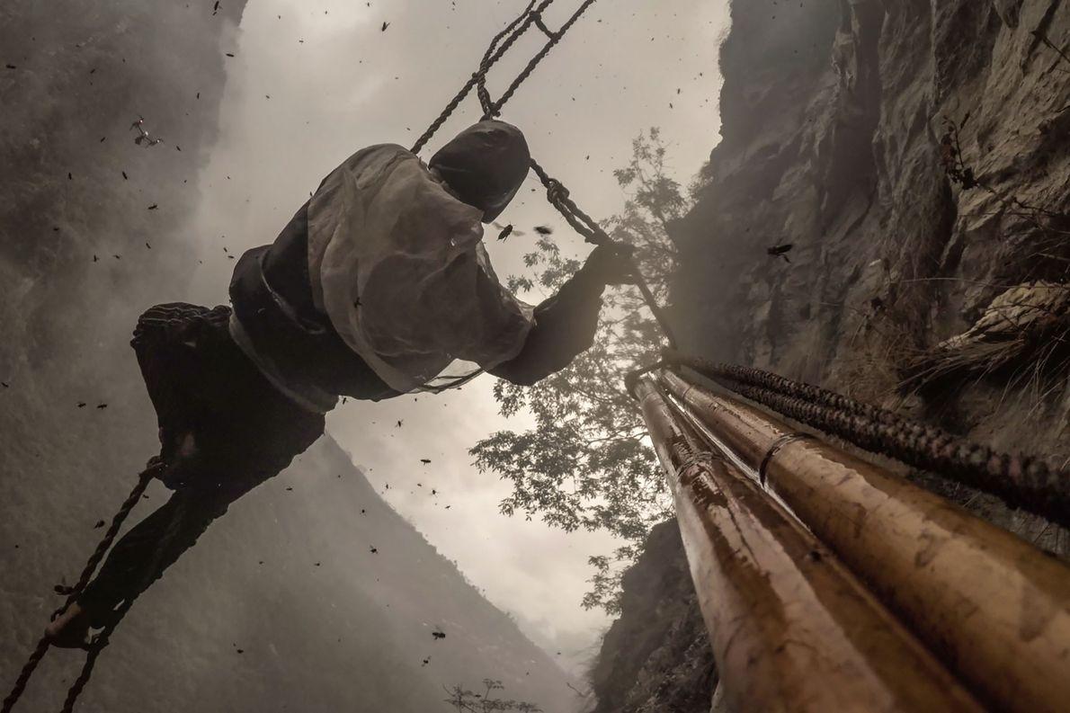 Ozturk hat Kameras an Maulis Bambusstange angebracht. Damit fing er den Moment ein, als Mauli ohne …