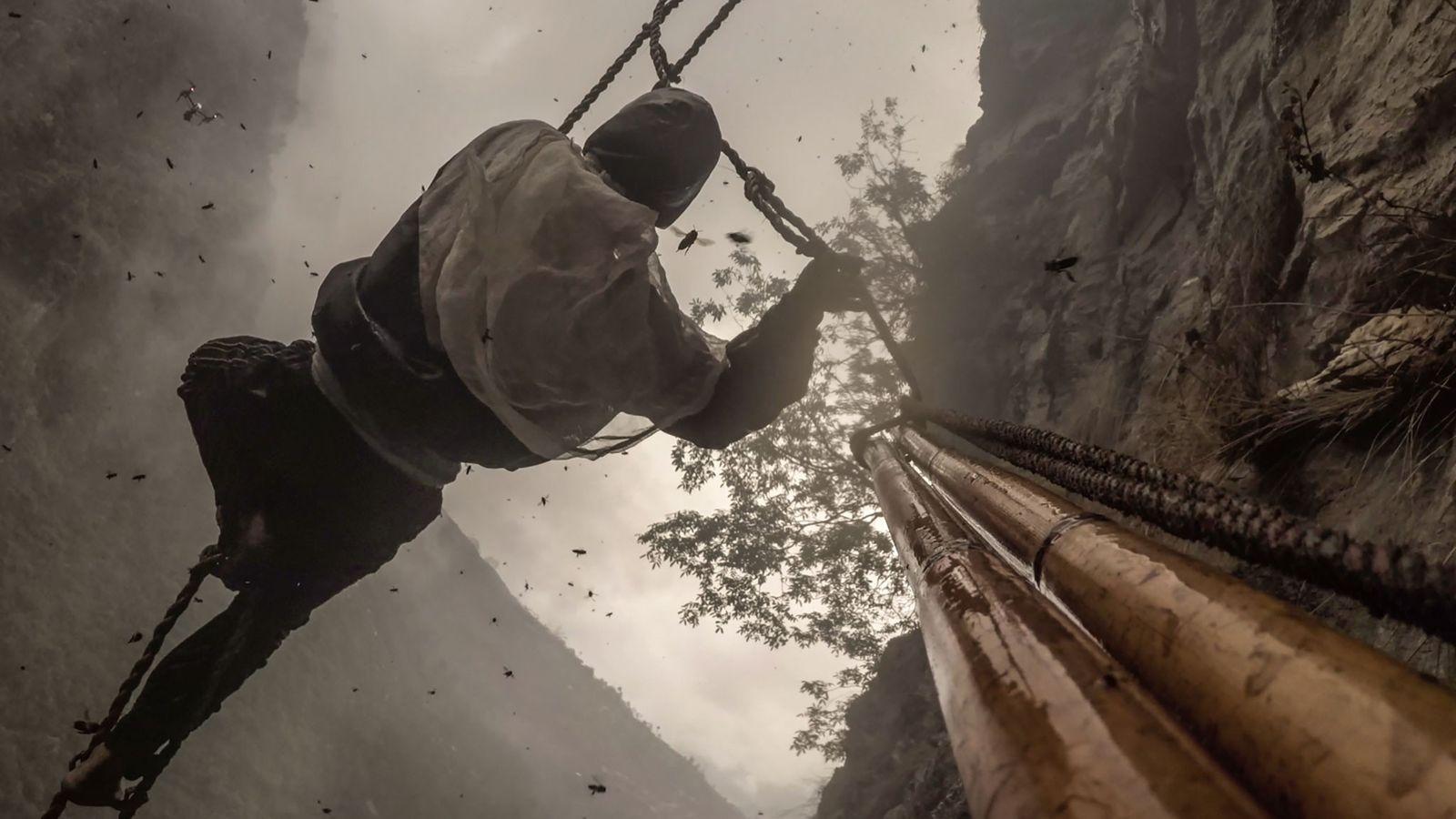 Honigernte in Nepal mit Bambusleiter