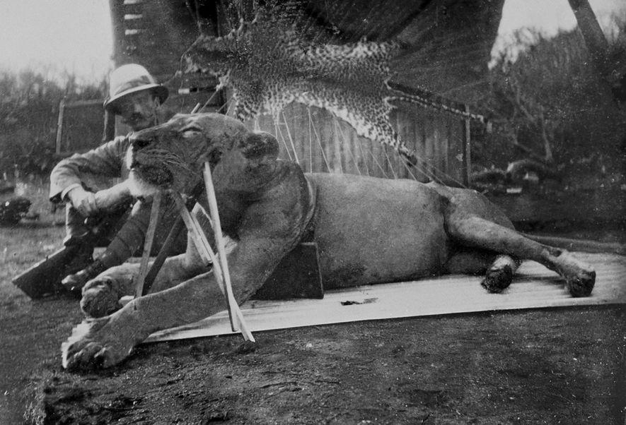 Warum machen manche Löwen Jagd auf Menschen?