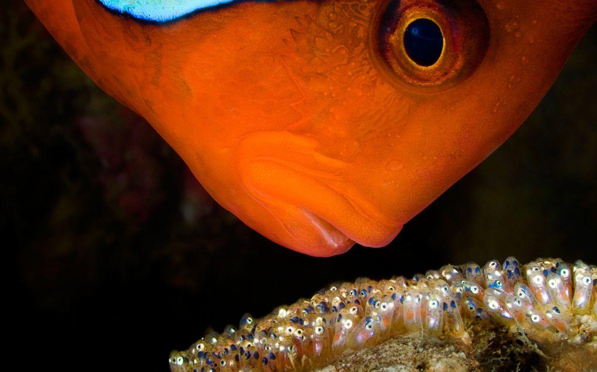 Unterwasser-Wächter
